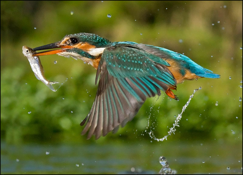 Photograph The catch by Tony Flashman on 500px