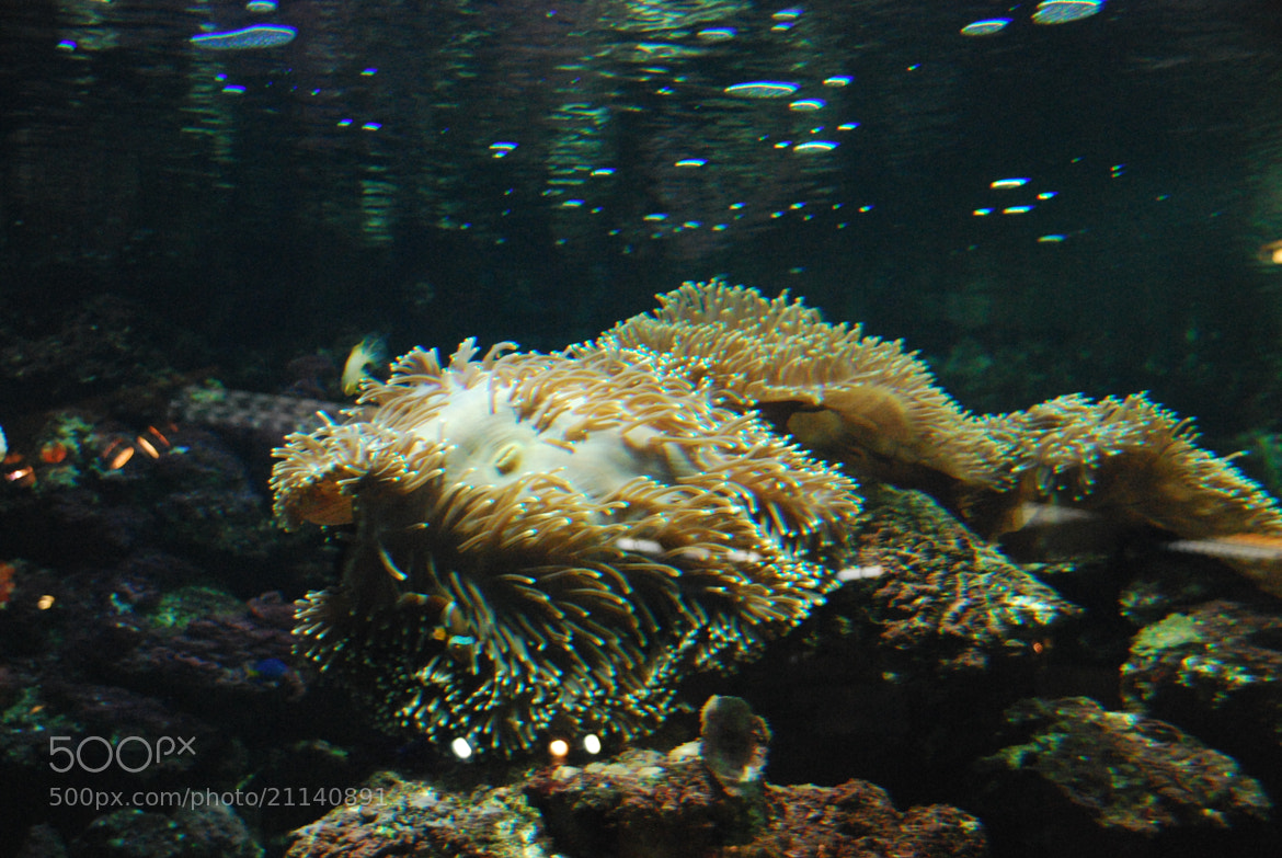 Photograph Under water life by Sam Azmy on 500px