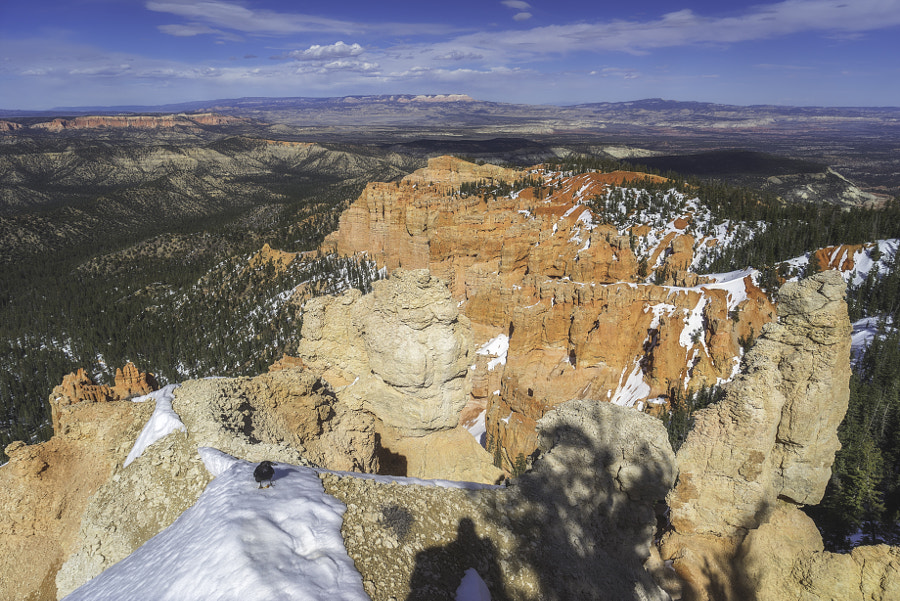 Bryce Canyon National Park VII