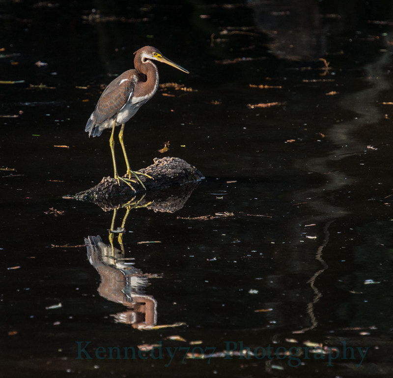 Photograph Hunting Heron by Wendy Kennedy on 500px