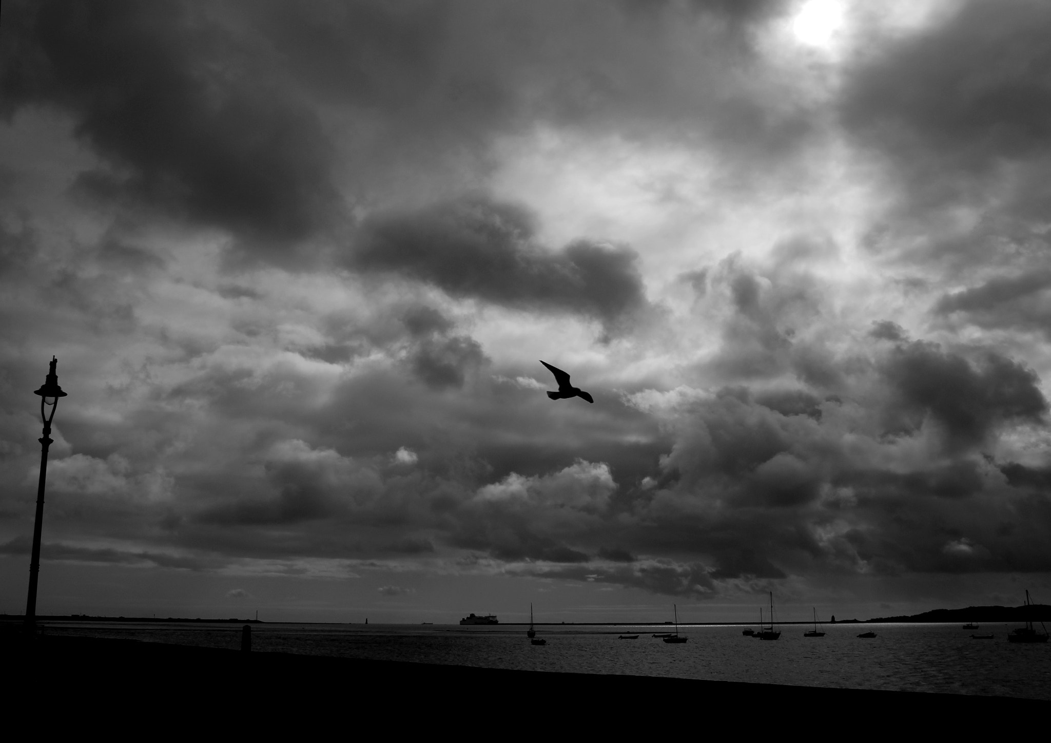 Photograph Stormy Flight by Peter Murphy on 500px