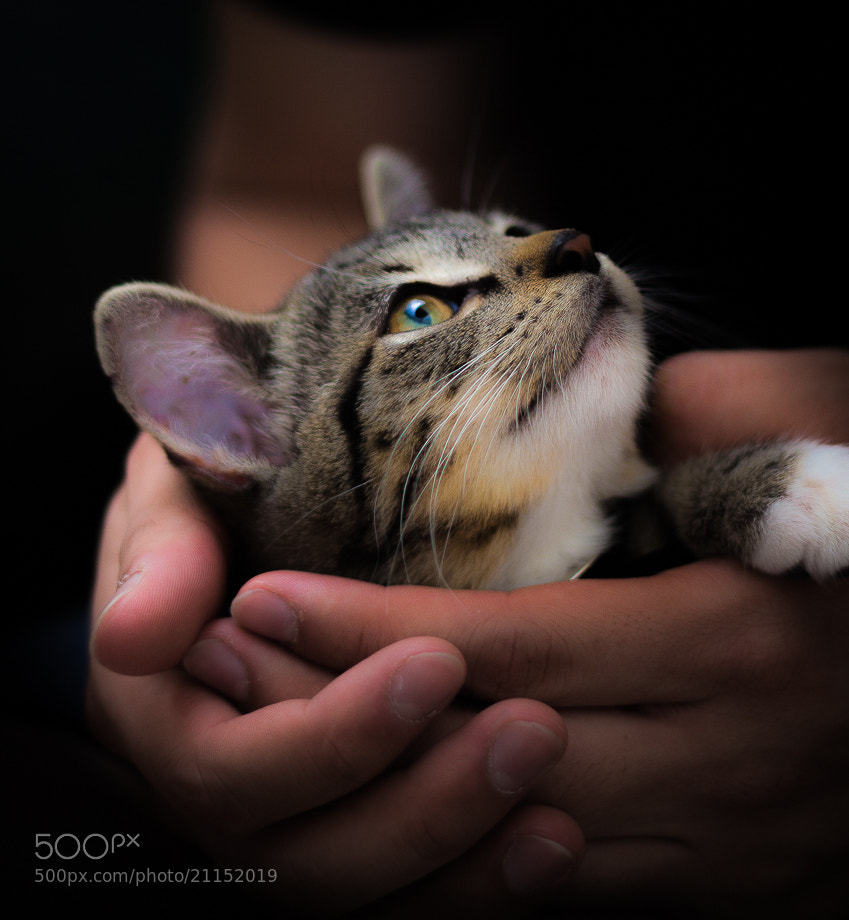 Photograph Little Ball of Fur by Qaris Kosim-Satyaputra on 500px