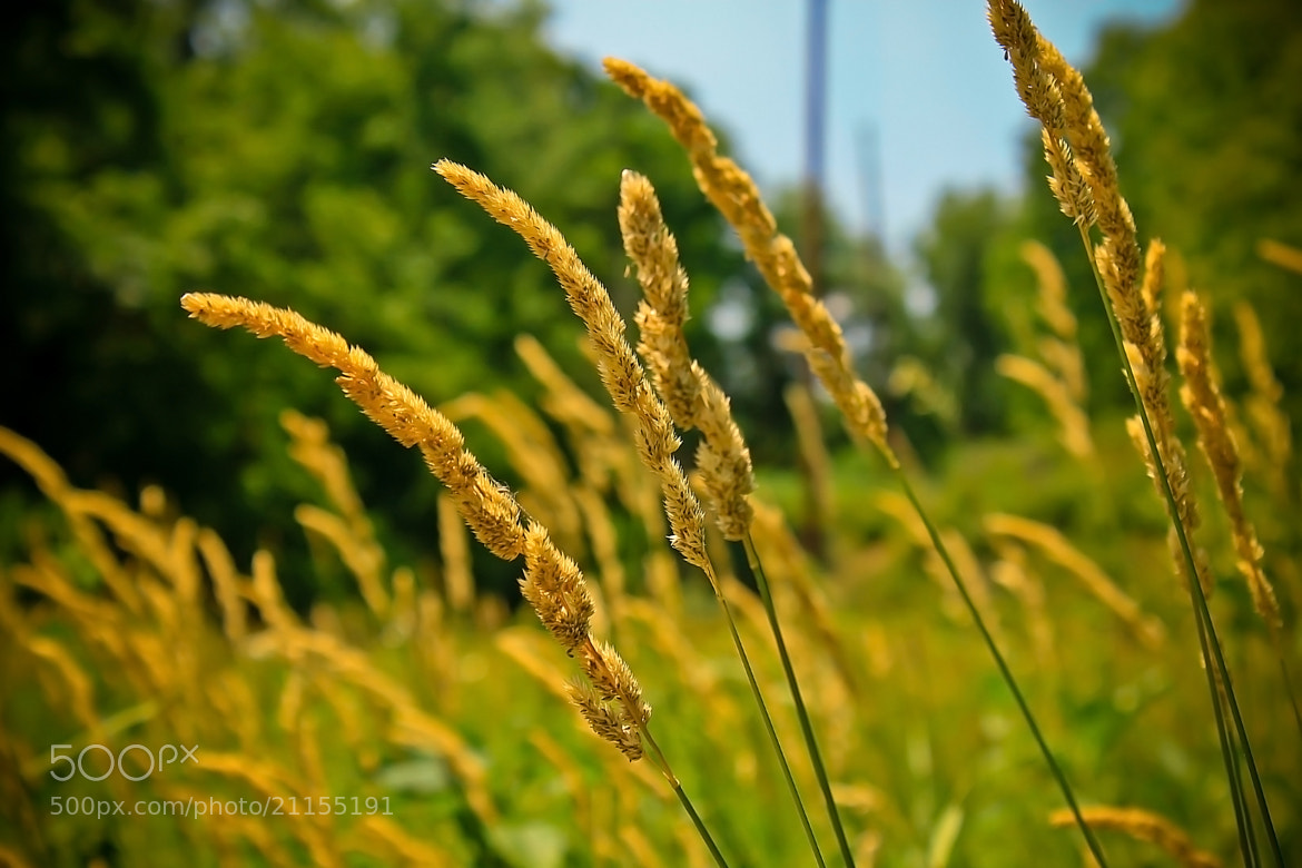 Photograph Weeds by Brandon Allen on 500px