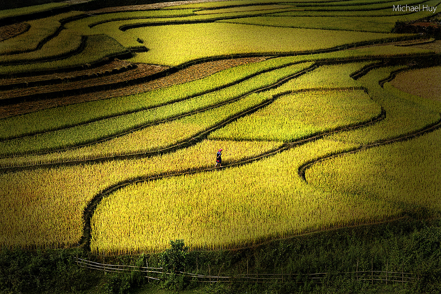 Rice Visit by Michael Huy  on 500px.com