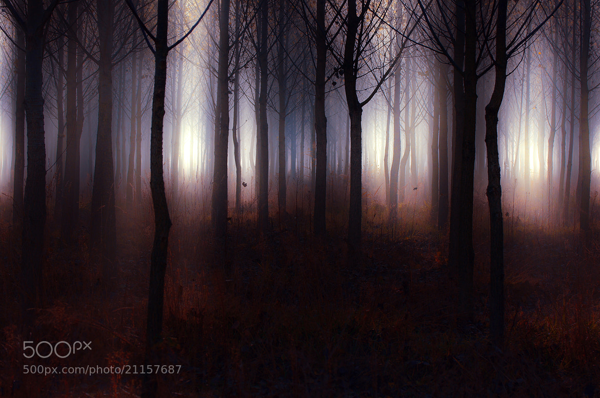Photograph Forest of Secrets by Andy 58 on 500px