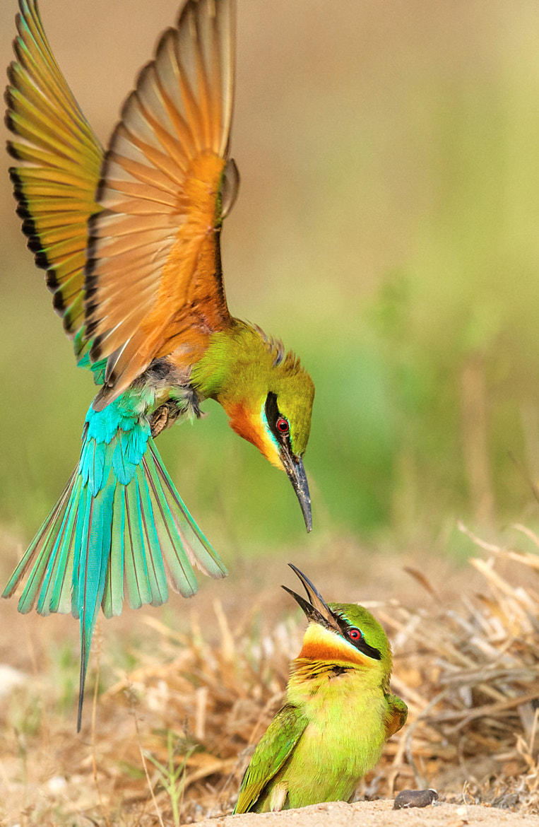 Bee Eaters - cover