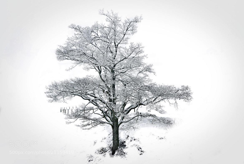 Photograph Winter Wonderland by Christian Merk on 500px