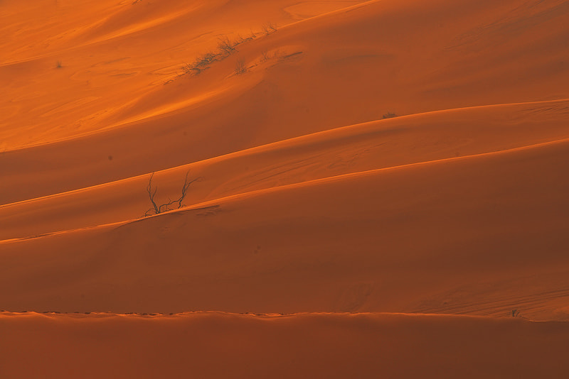 Photograph Sand after rain by Nasser  AlOthman on 500px