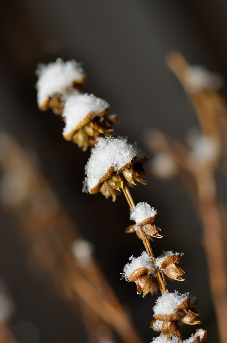 Photograph snow flowers by Elissar Khalek on 500px