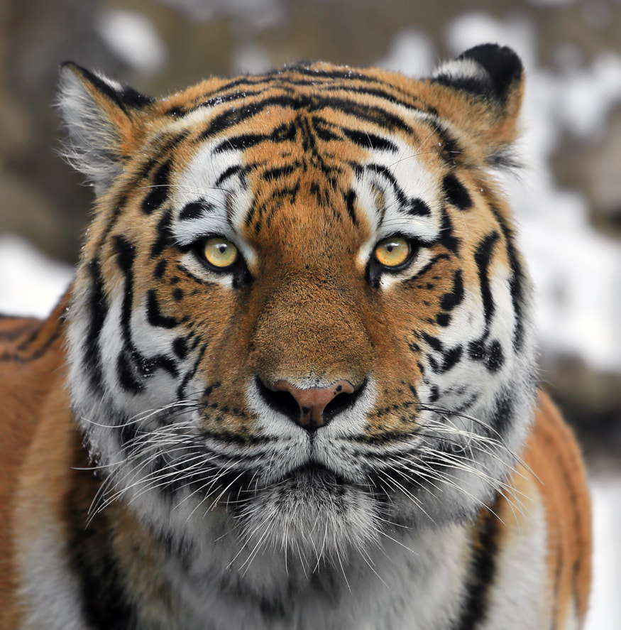 Photograph Portrait by Klaus Wiese on 500px