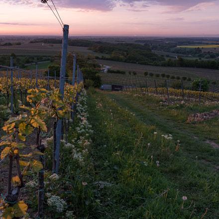 Sunrise on Vineyard