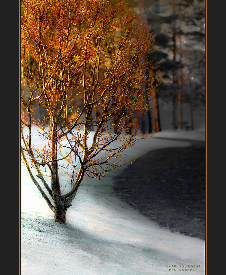 Photograph Sunlight and Frost by Paul Jolicoeur on 500px