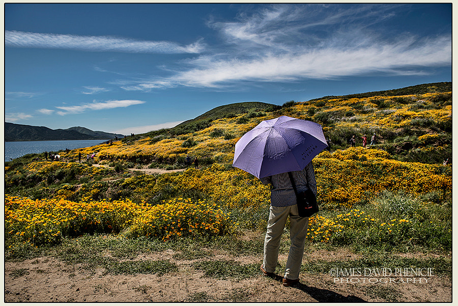 California Flower Bloom #5