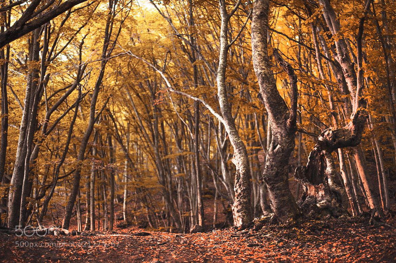 Photograph Untitled by Антон Куба on 500px