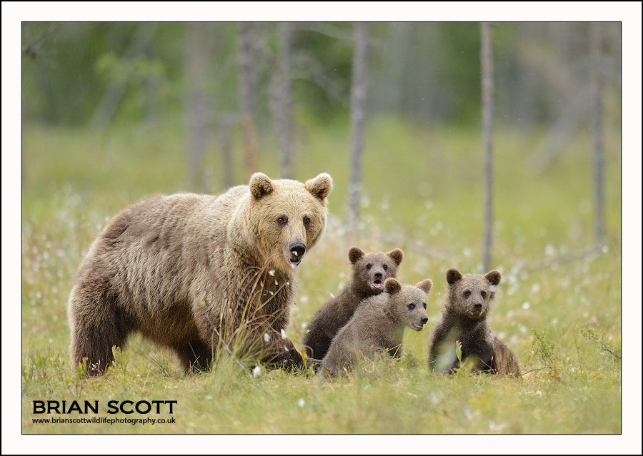 Photograph Mother and Cubs by Brian Scott on 500px