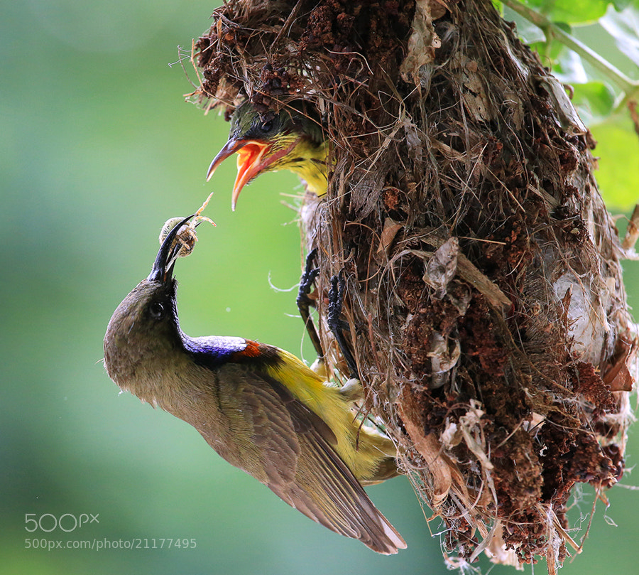 Photograph Life for Life by Prachit Punyapor on 500px