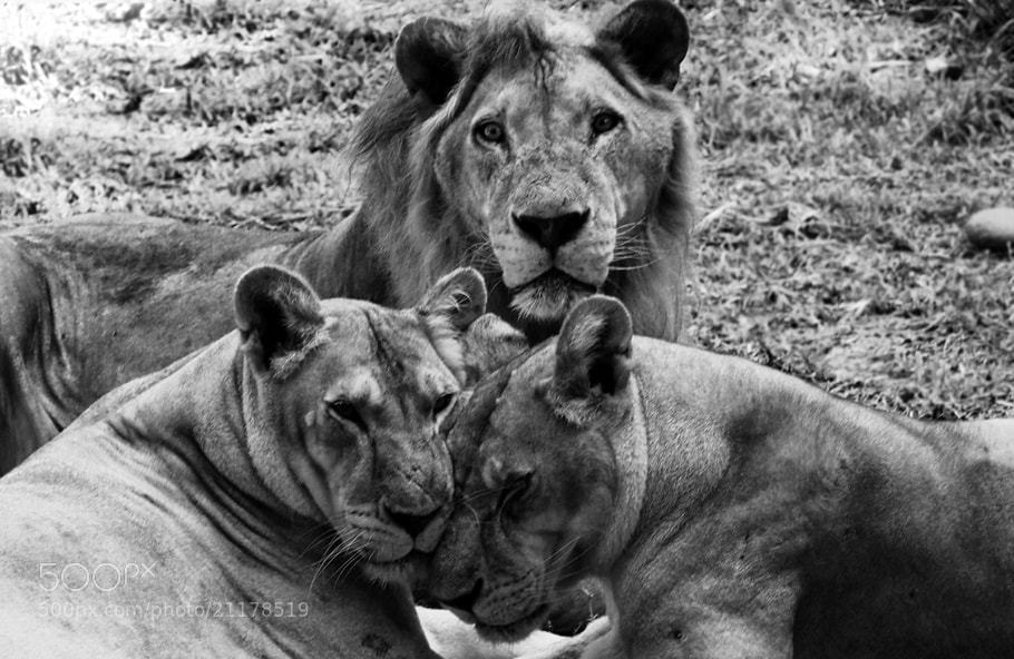 Photograph Polygamy by Prabu dennaga on 500px