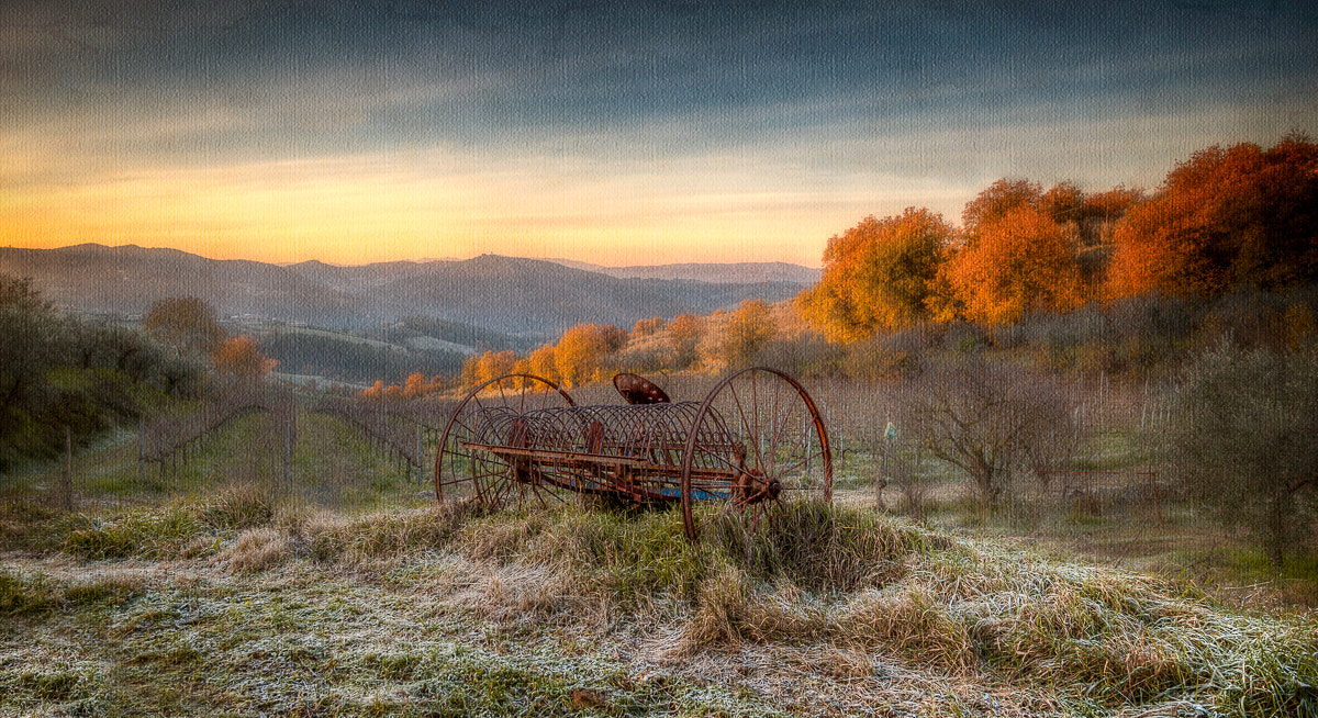 Photograph Autumn Gold by Michael Avory on 500px