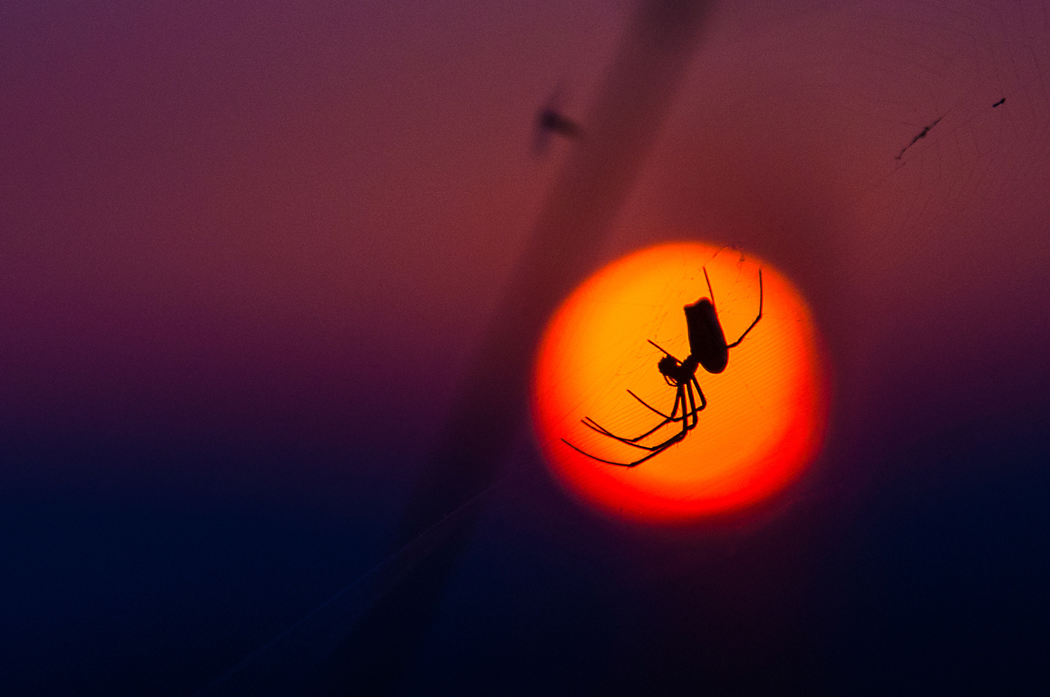 Photograph Spider by Bo-Yuan Zheng on 500px