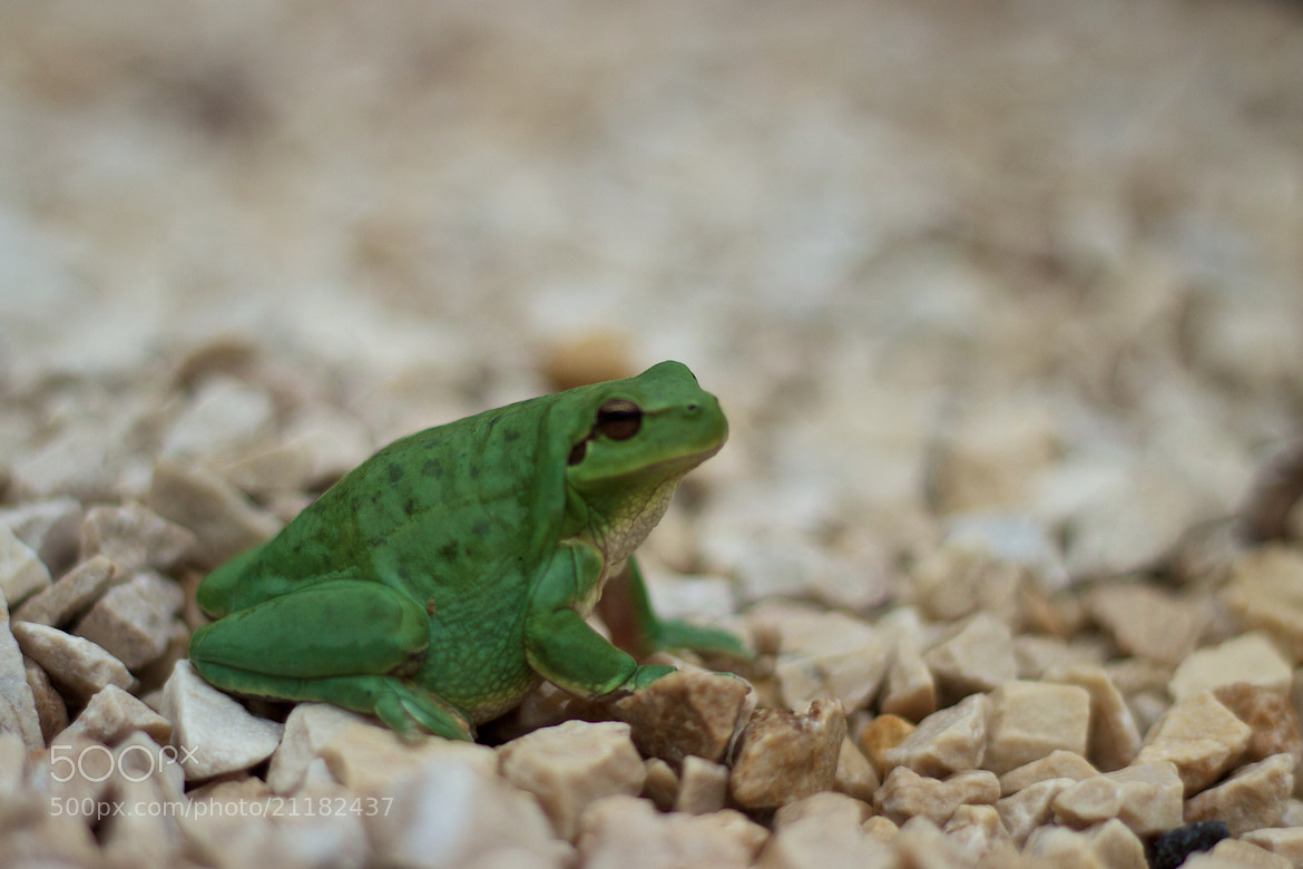 Photograph Froggy ! by Laurent Rouquette on 500px