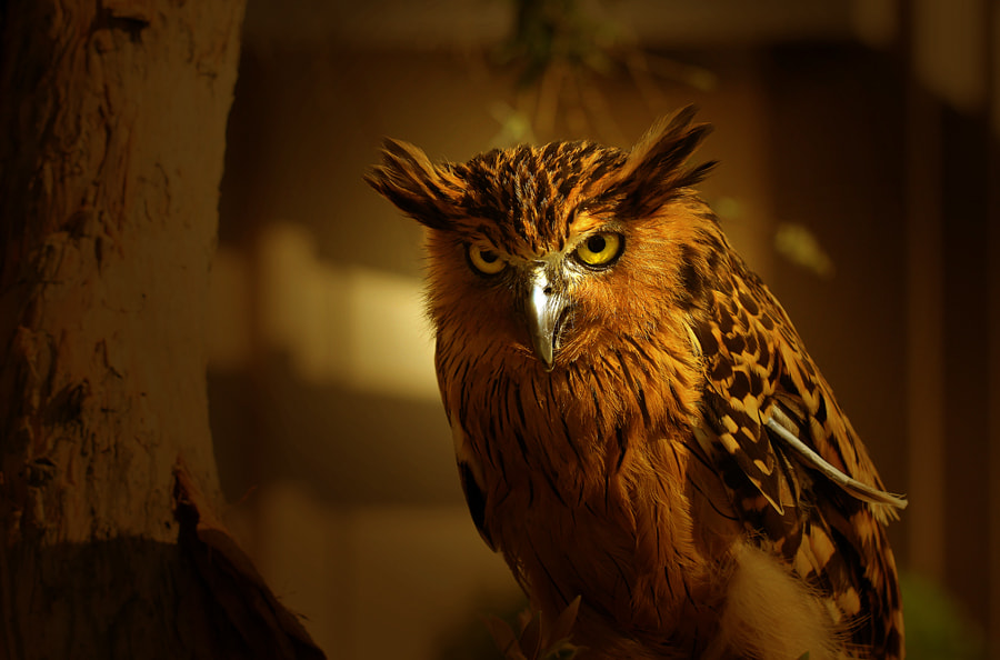 """Photograph """"The Owls"""" by Sirajuddin Halim on 500px"""