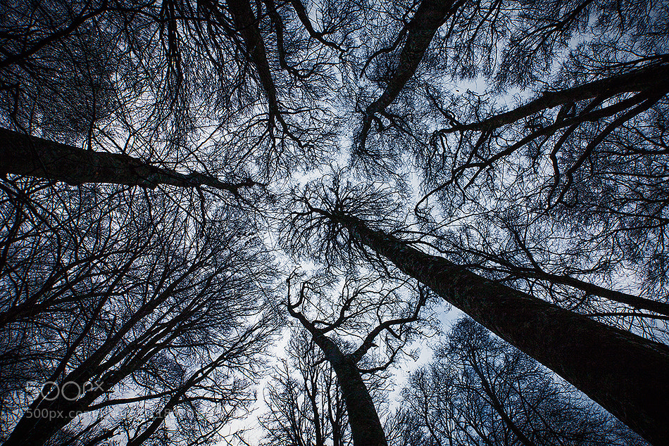Photograph Raise your Eyes & Imagine by Alberto Di Donato on 500px