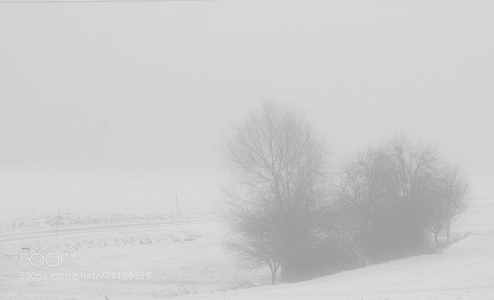 Photograph Snow, sad winter #1 by Emanuel Dirschedl on 500px