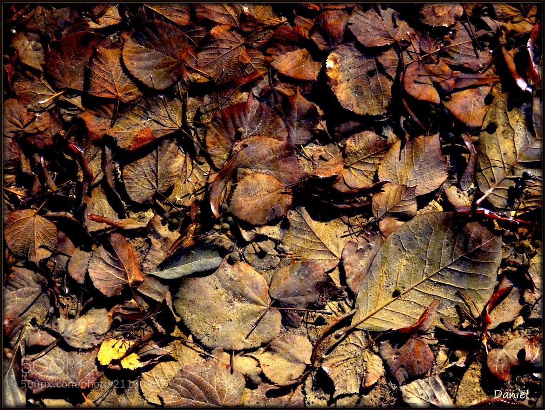 Photograph Reminder to autumn...   ..   . by Daniël Van Hoecke on 500px