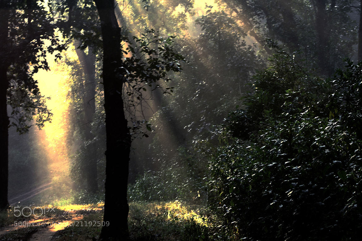 Photograph After Sun Rays Enters by Sudipta Mukhopadhyay on 500px