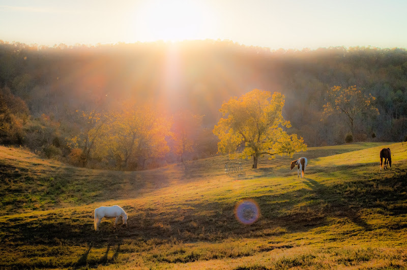 Photograph Tennessee Countryside by abanakas on 500px