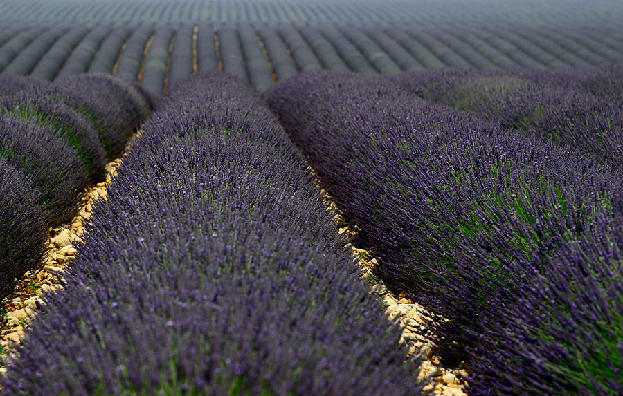 Photograph Violet Waves by Izidor Gasperlin on 500px