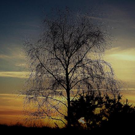 Moore Tree
