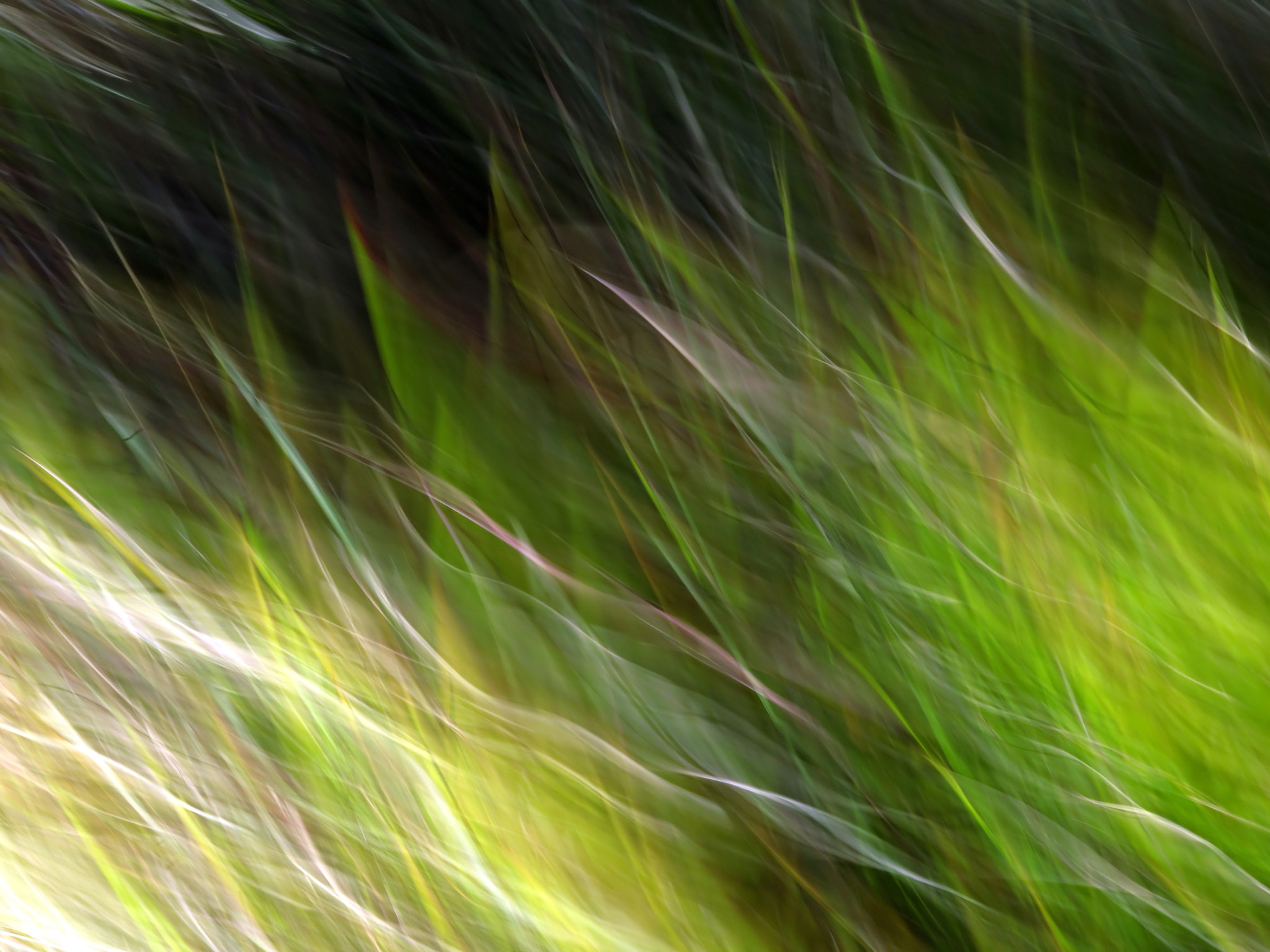Photograph Watching the Wind Blow #2 by Kitsmumma Fine Art on 500px