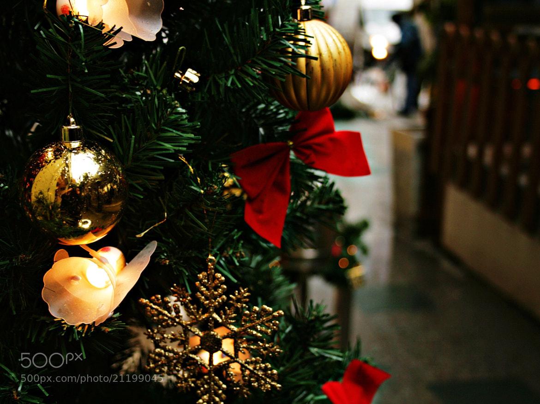 Photograph Merry Christmas =) by Sibel Sedefoğlu on 500px