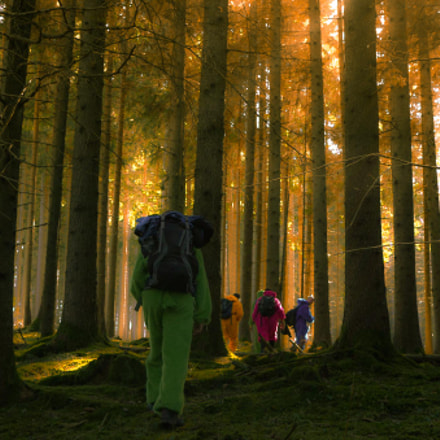 Walking in the wood with colourfull bears