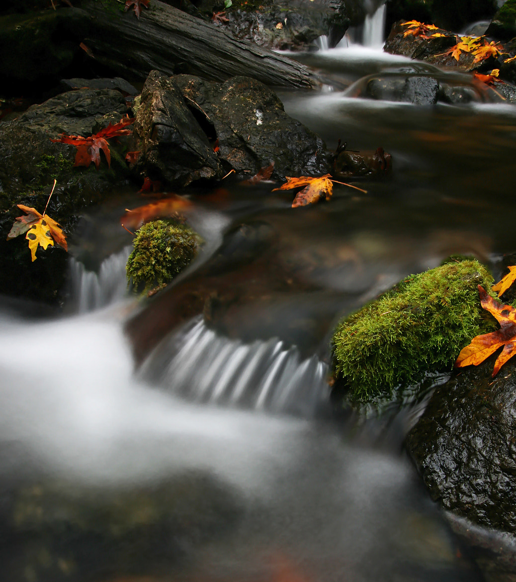 Photograph The Fall by Lance McCoy on 500px