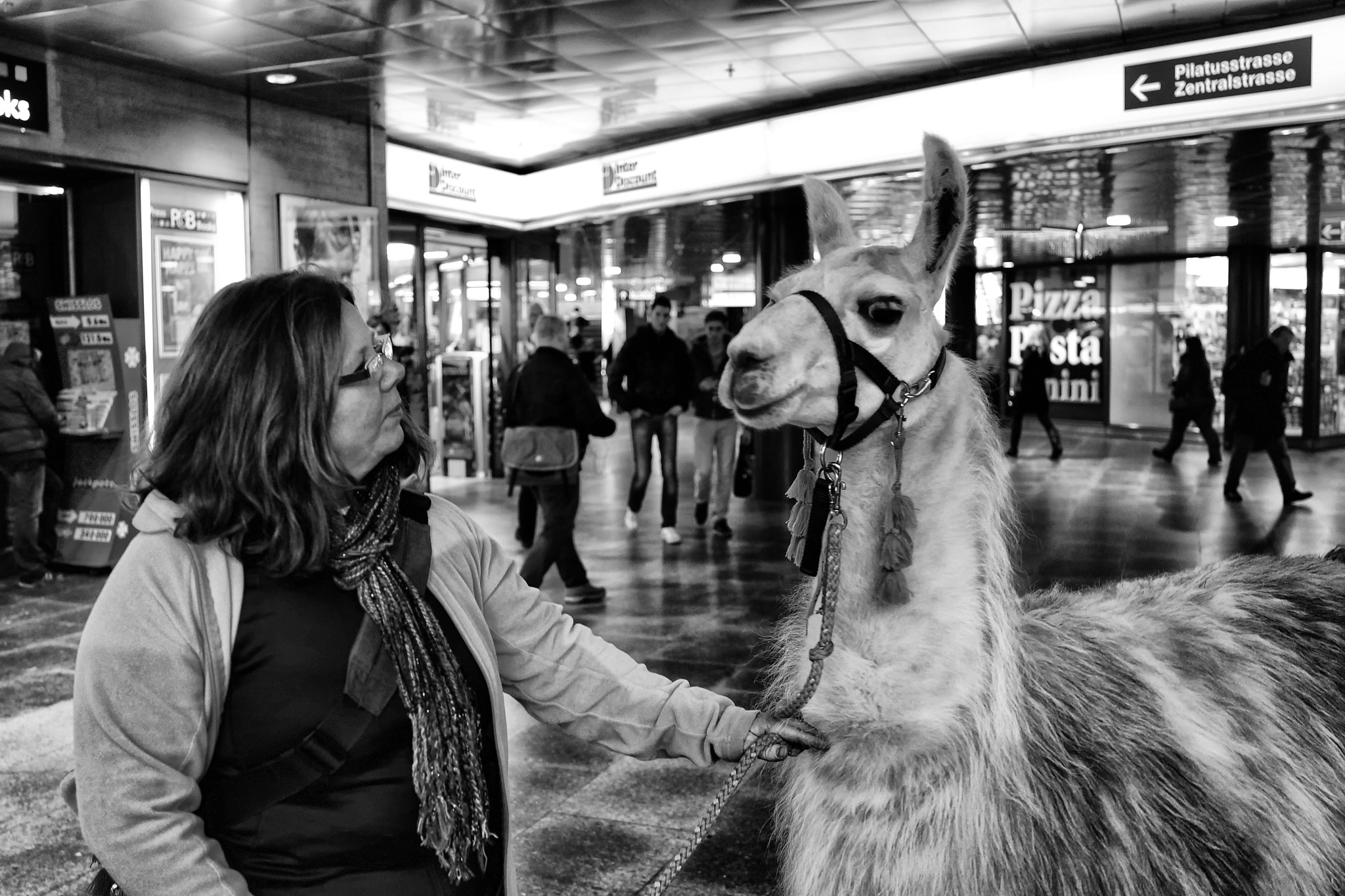Photograph quickly shot - Llama at the station by Alexander Ess on 500px