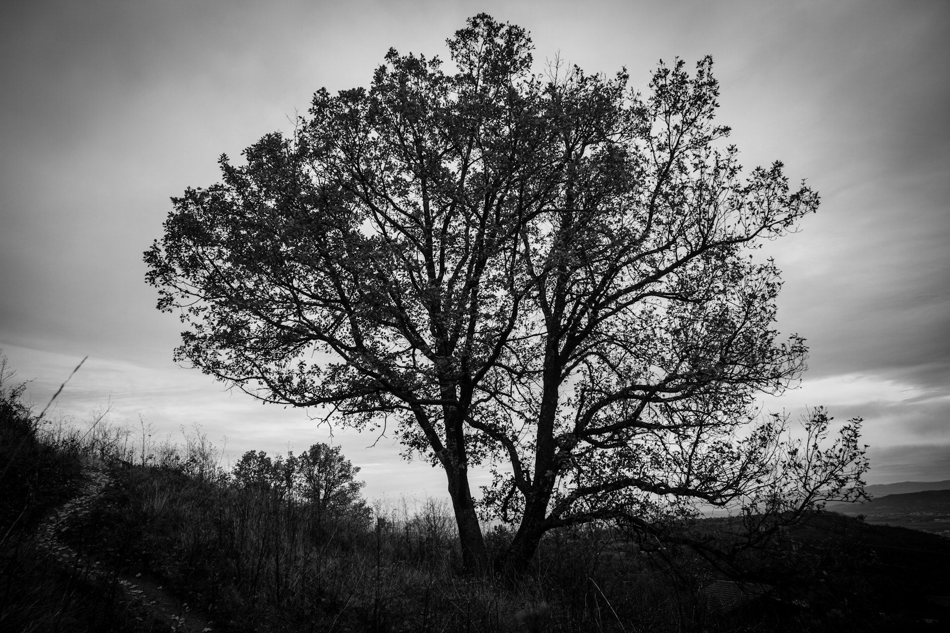 Photograph L'arbre by Philippe Jacquetin on 500px