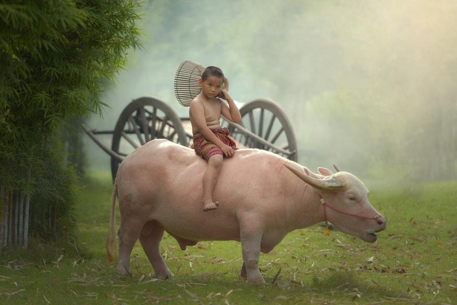 Buffalo boy living in rural Thailand by somchai sanvongchaiya