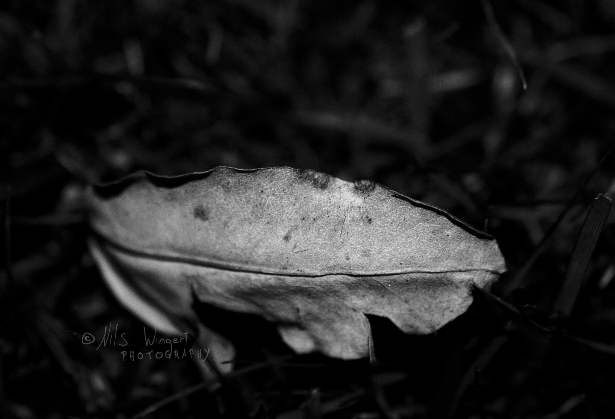 Photograph fallen leaf by Nils Wingert on 500px