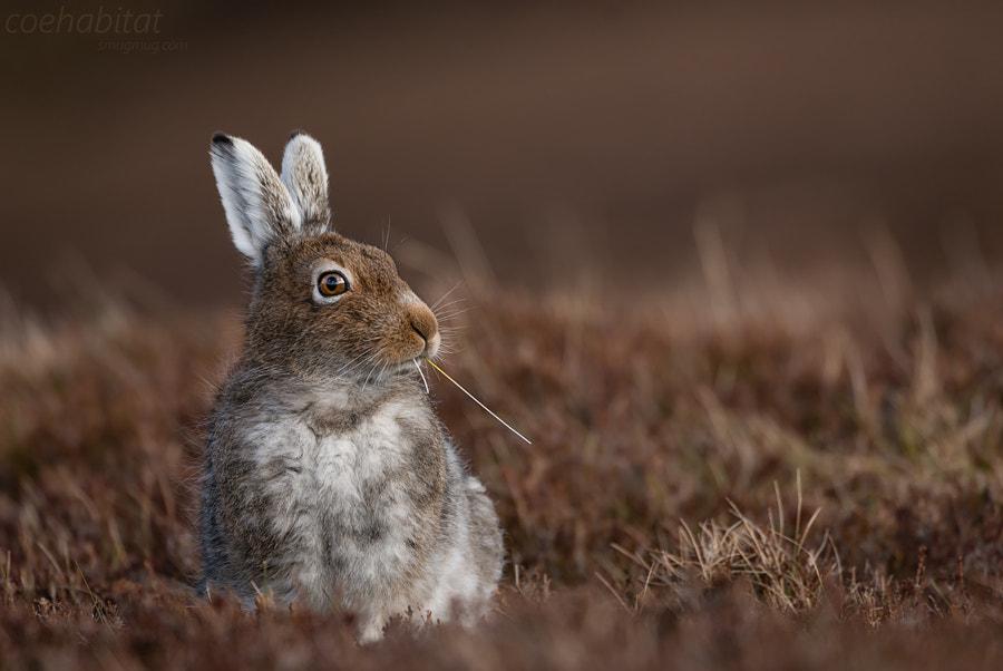 Vamp- hare... by John Coe on 500px.com