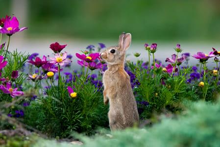 Flowery Scene