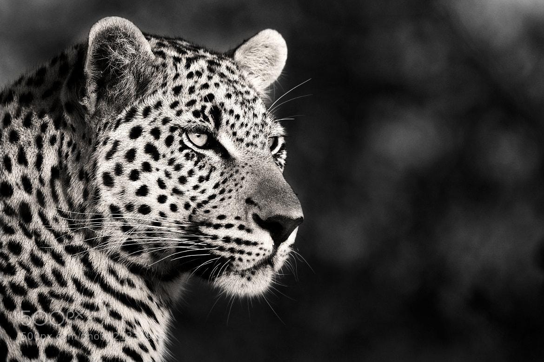 Photograph Most Beautiful by Rudi Hulshof on 500px