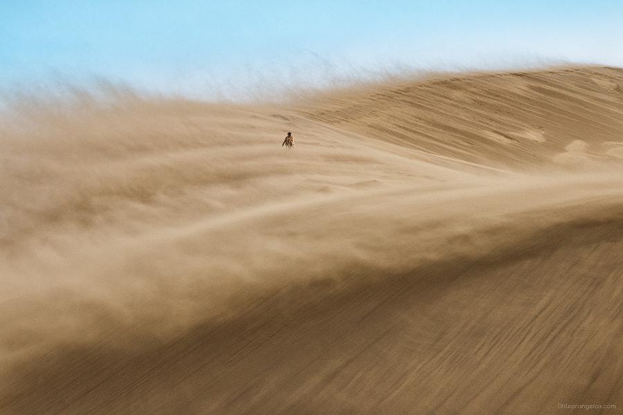 Wanderer, автор — Alesya Osadchaya на 500px.com