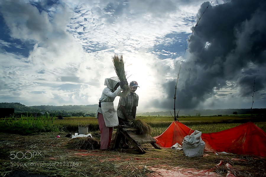 Photograph Panen Raya... by 3 Joko on 500px