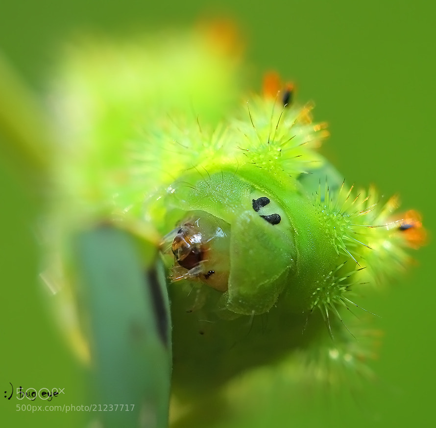 Photograph green world by bug eye :) on 500px