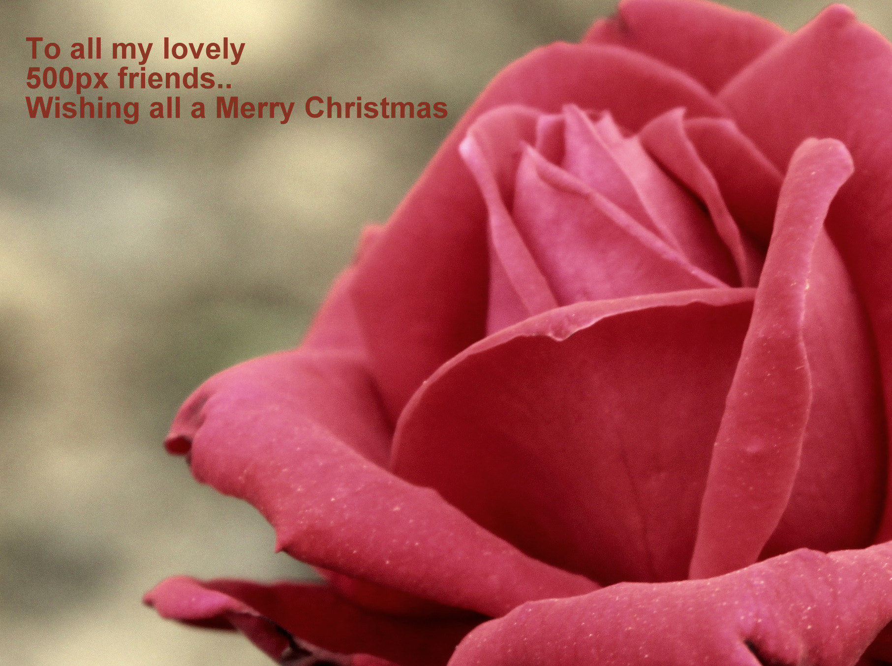 Photograph Merry Christmas :) by Samrat  Mukhopadhyay on 500px