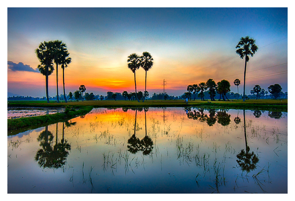 Photograph Palmyra trees with reflections by Peter Pham on 500px