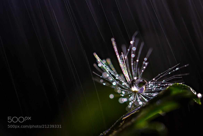 Photograph Diamonds Rain by Miki Asai on 500px