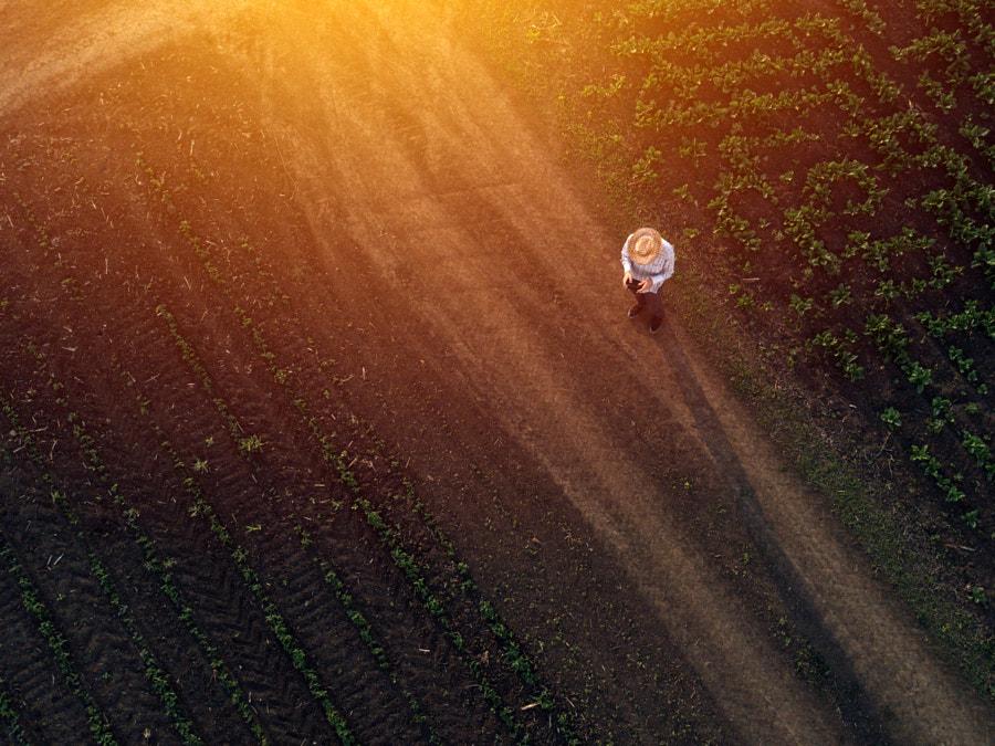 Farmer using drone in sugar beet crop field by Igor Stevanovic on 500px.com